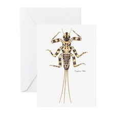 Mayfly Greeting Cards (Pk of 10)
