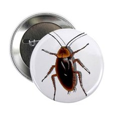 "Cockroach 2.25"" Button (100 pack)"