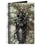 Giant Click Beetle Journal