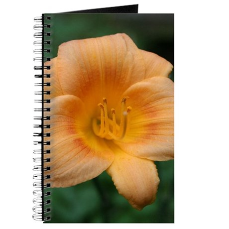 Pach Daylily Journal