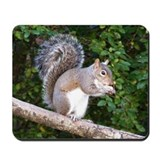 Squirrel on Limb Mousepad