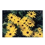 Black-Eyed Susan Postcards (Package of 8)