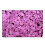 Pink Phlox Postcards (Package of 8)