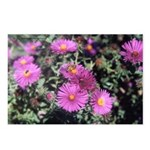 New England Asters and Bee Postcard (Package of 8)