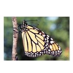 Monarch Butterfly Postcards (Package of 8)