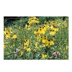 Grey-Headed Coneflower Postcards (Package of 8)