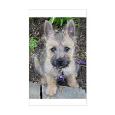 Emma, Cairn Terrier Rectangle Decal