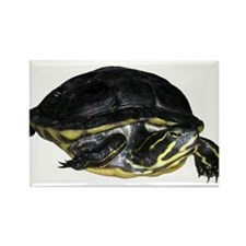 Turtle Rectangle Magnet (10 pack)