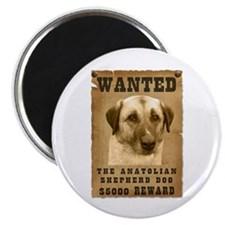 """Wanted"" Anatolian Shepherd Dog Magnet"