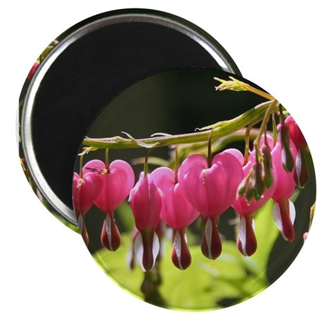 Bleeding Heart Dry Brush Magnet