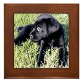 Coal Puppy Framed Tile