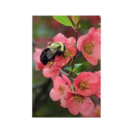 Crabapple Buzzzz Rectangle Magnet