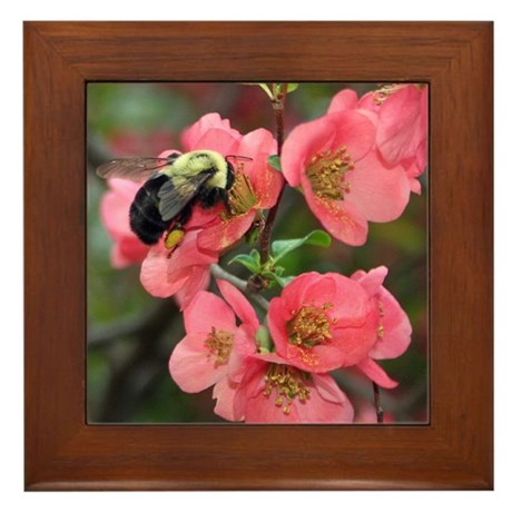 Crabapple Buzzzz Framed Tile