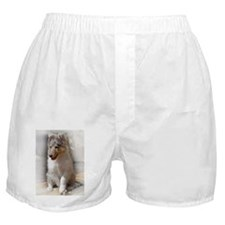 Funny Collie puppy Boxer Shorts