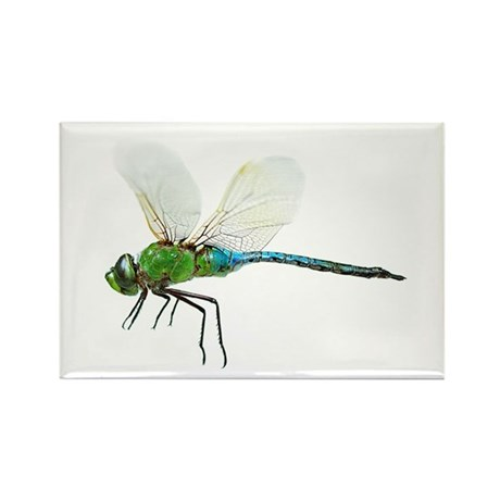 Dragonfly 3 Rectangle Magnet