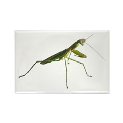 Praying Mantis Rectangle Magnet