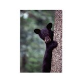 Black Bear Cub Rectangle Magnet