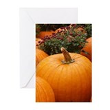 Morning Glory Farm Harvest Greeting Cards (Pk of 1