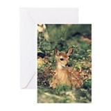 White Tailed Deer Fawn Greeting Card (Pack of 6)
