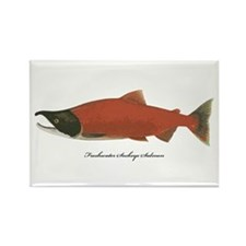 Sockeye Salmon Rectangle Magnet