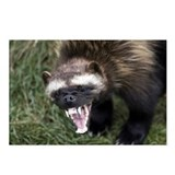 Cute Wolverine animal Postcards (Package of 8)