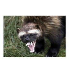 Cute Wolverine Postcards (Package of 8)