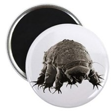 Water Bear Magnet