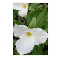 Trillium Postcards (Package of 8)
