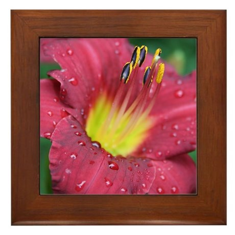 Scarlet Lily Drops Framed Tile