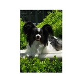 Papillon Rectangle Magnet (10 pack)