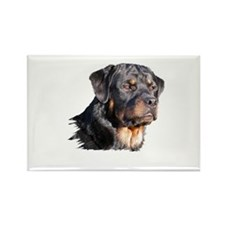 Cute Rottie Rectangle Magnet