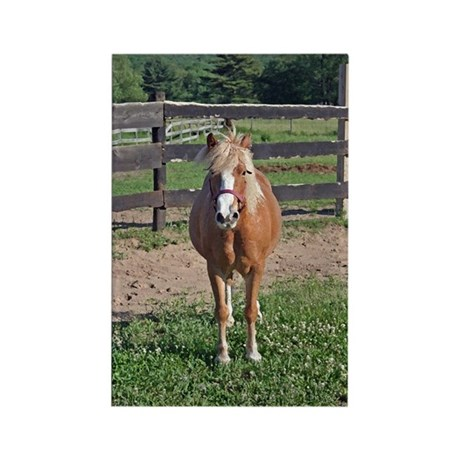 Pony Love (Brush) Rectangle Magnet
