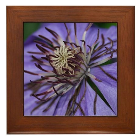 Clematis Framed Tile