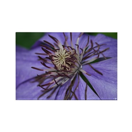 Clematis Rectangle Magnet