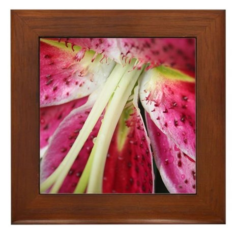 Stargazer Framed Tile