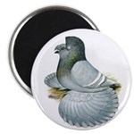"""English Trumpeter Opal 2.25"""" Magnet (100 pack"""