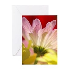 Daisy Splash Every Day Greeting Card