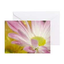 Daisy Splash 4 Greeting Cards (Pk of 20)