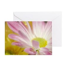 Daisy Splash 4 Greeting Card