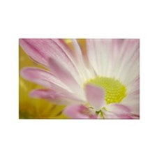Daisy Splash 4 Rectangle Magnet (100 pack)