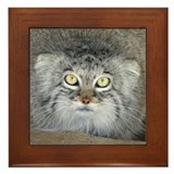 Pallas' Cat Framed Tile