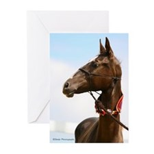 Akhal-Teke Horse Greeting Cards (Pk of 10)