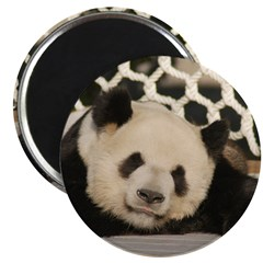 Giant Panda 2.25&quot; Magnet (100 pack)