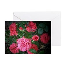 Roses Pink Pop Art Greeting Cards (Pk of 20)