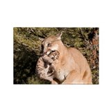 Cougar Rectangle Magnet