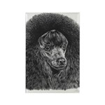 Black Poodle Rectangle Magnet (100 pack)
