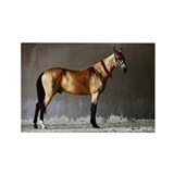 Akhal-Teke Horse Rectangle Magnet (10 pack)