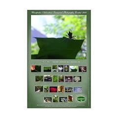 Carley Pennecke Mini Poster Print