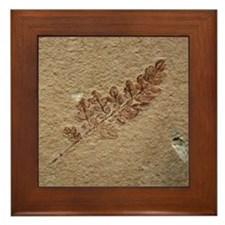 Brown Fern Fossil Framed Art Tile