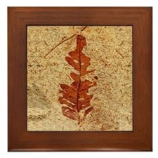 Red Fern Fossil Framed Art Tile